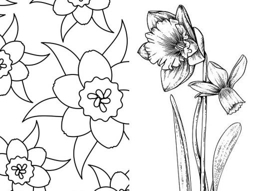narcis kleurplaat en mandala en narcissus yurls nieuws